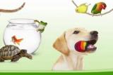 ZooPlus. Promocje w e-sklepie zoologicznym